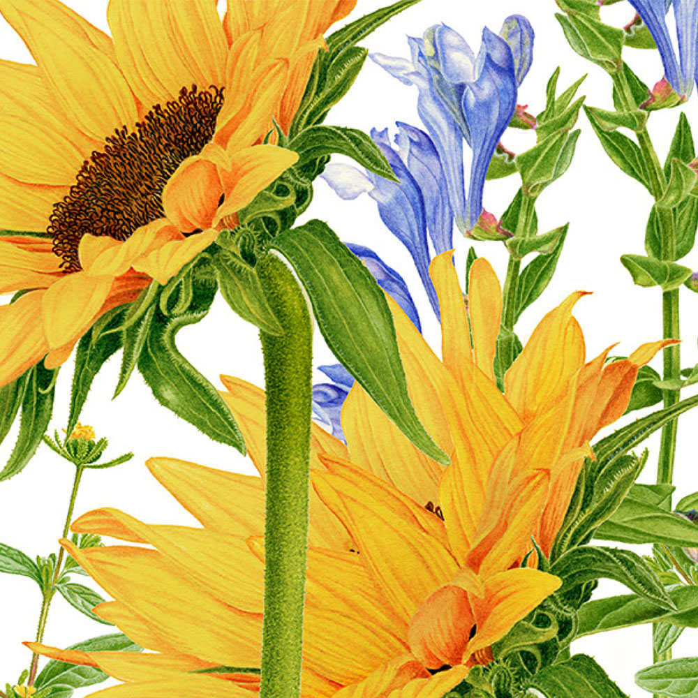 Carolyn-Jenkins-Darphin-Sunflowers