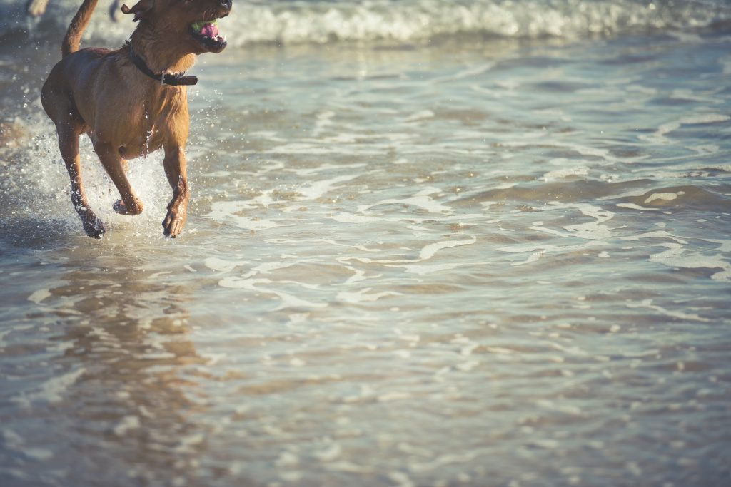 Dog friendly holidays in Padstow