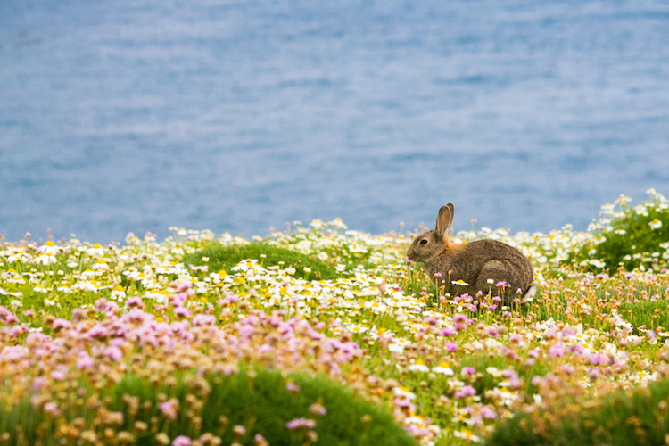 Bunny Easter Holidays Cornwall