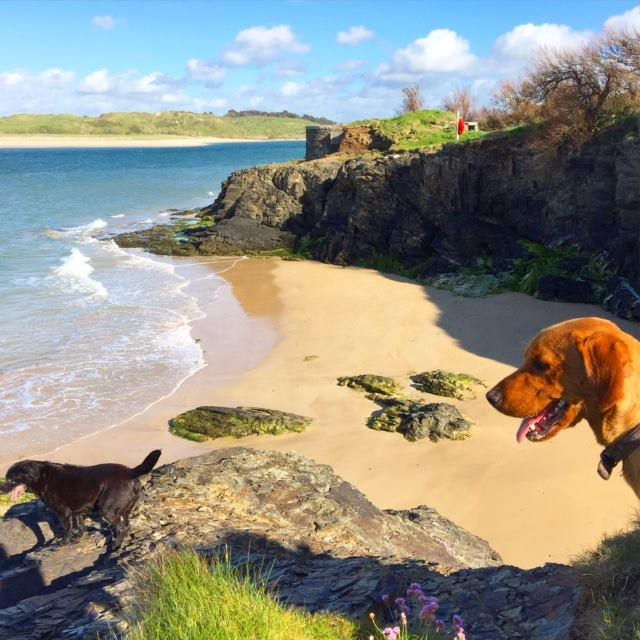 dogs-on-beach-near-padstow