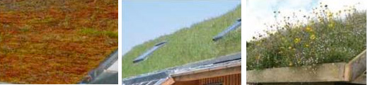 Different green roofs