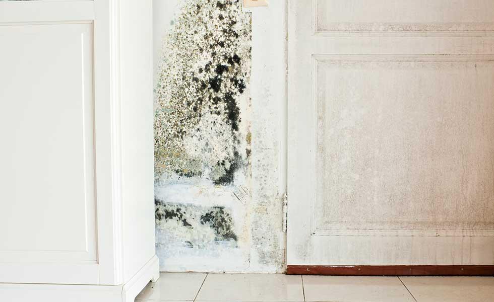 Damp in a white kitchen