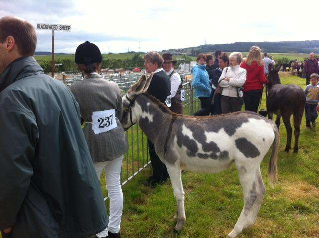 August-2012-donkey
