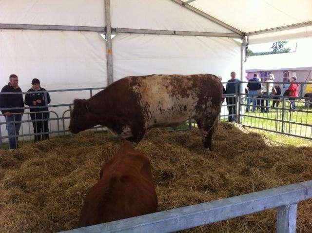 august-2012-bull