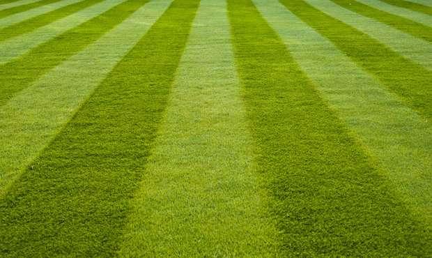 a striped green lawn