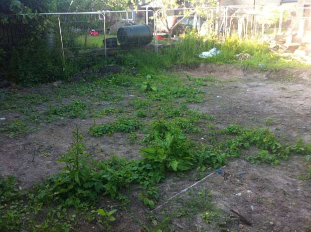 Weeds on the site