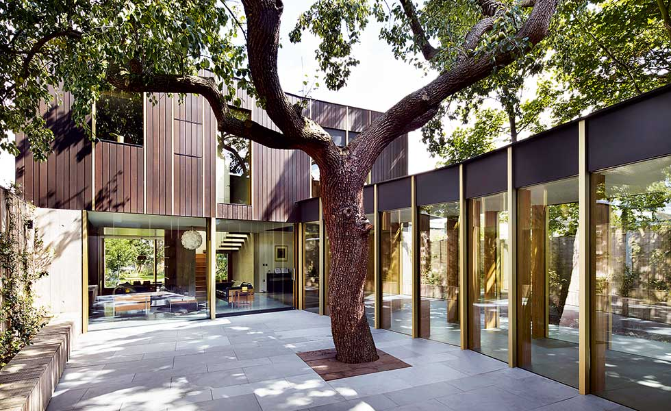 A 100 year old pear tree sits in the centre of this contemporary courtyard home in London by Edgley Design