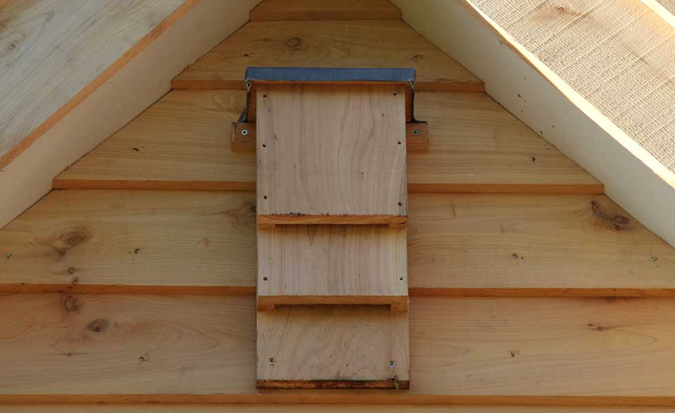 red cedar bat box