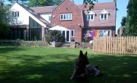 SIPS UK newbuild garden dog