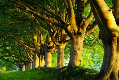 Braemar Arboriculture company image