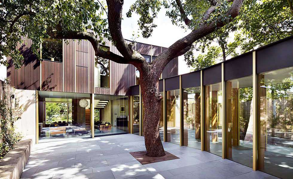 central-courtyard-tree