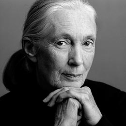 Dr Jane Goodall Dbe Image