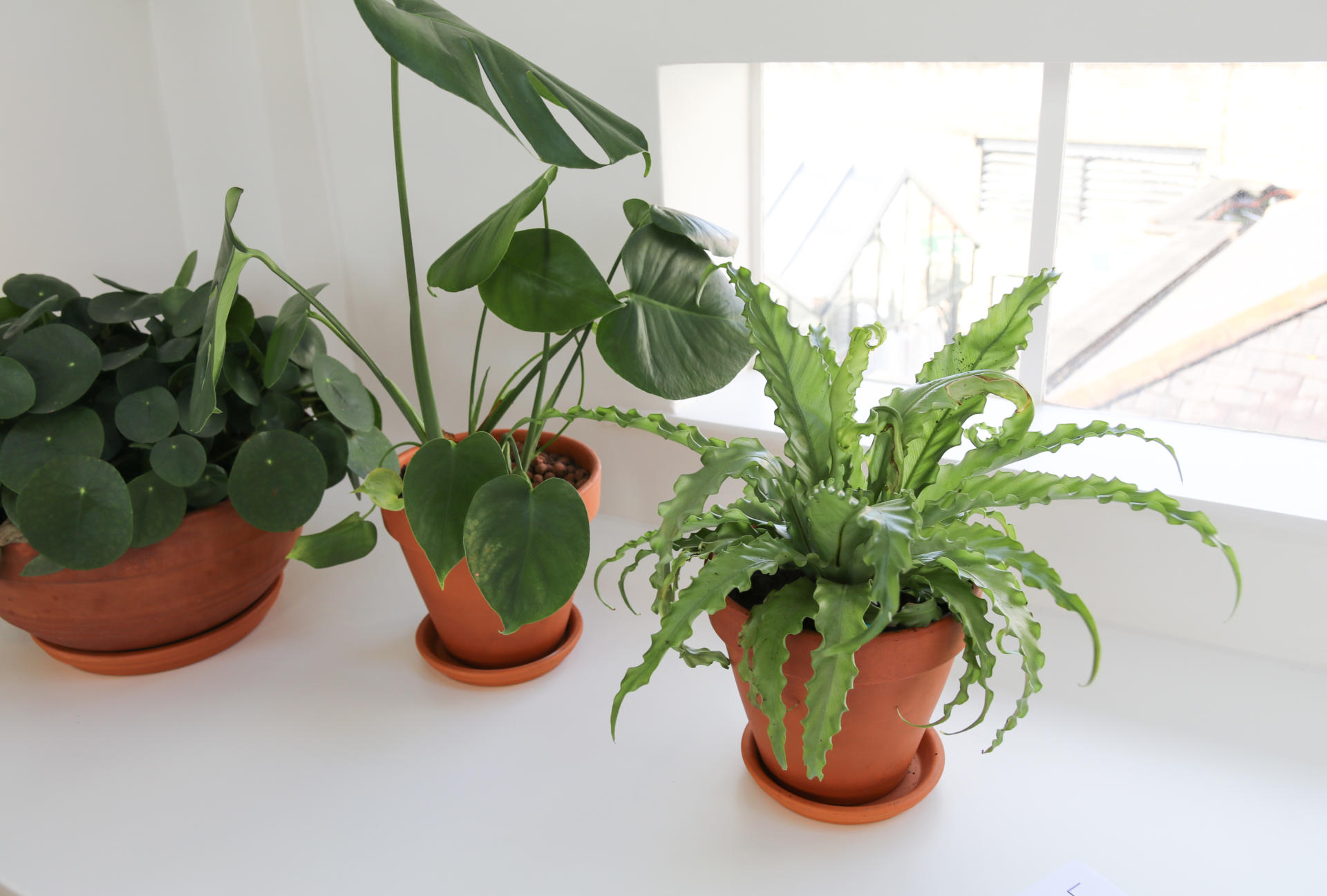 How Plants Can Increase Productivity in the Workplace | LABS on order birds of paradise plant, zamiifolia house plant, spider house plant, fig house plant, houseplants plant, croton house plant, banana house plant, cast iron plant, rubber house plant, hydrangea house plant, peperomia house plant, fern house plant, zi zi plant, arrowhead house plant, umbrella house plant, avocado house plant, eternity plant, house plant identification succulent plant,