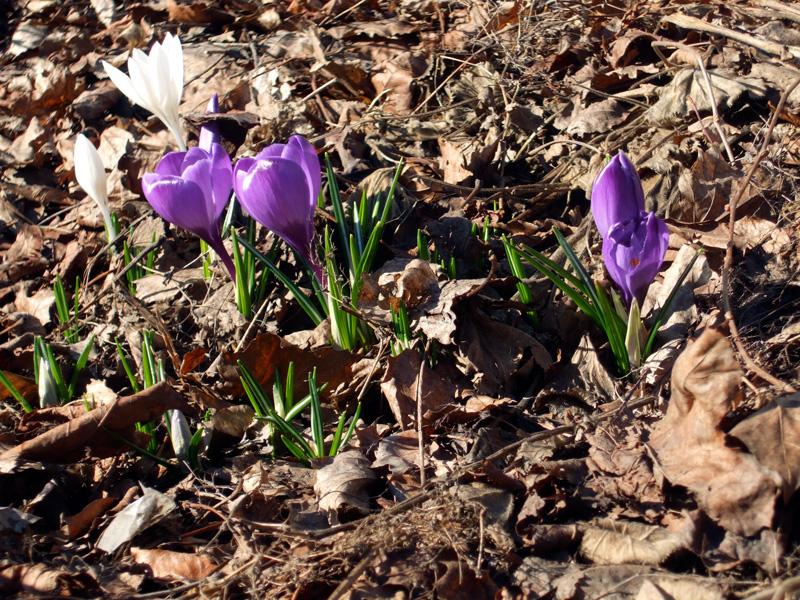 Spring breaking through in Oslo