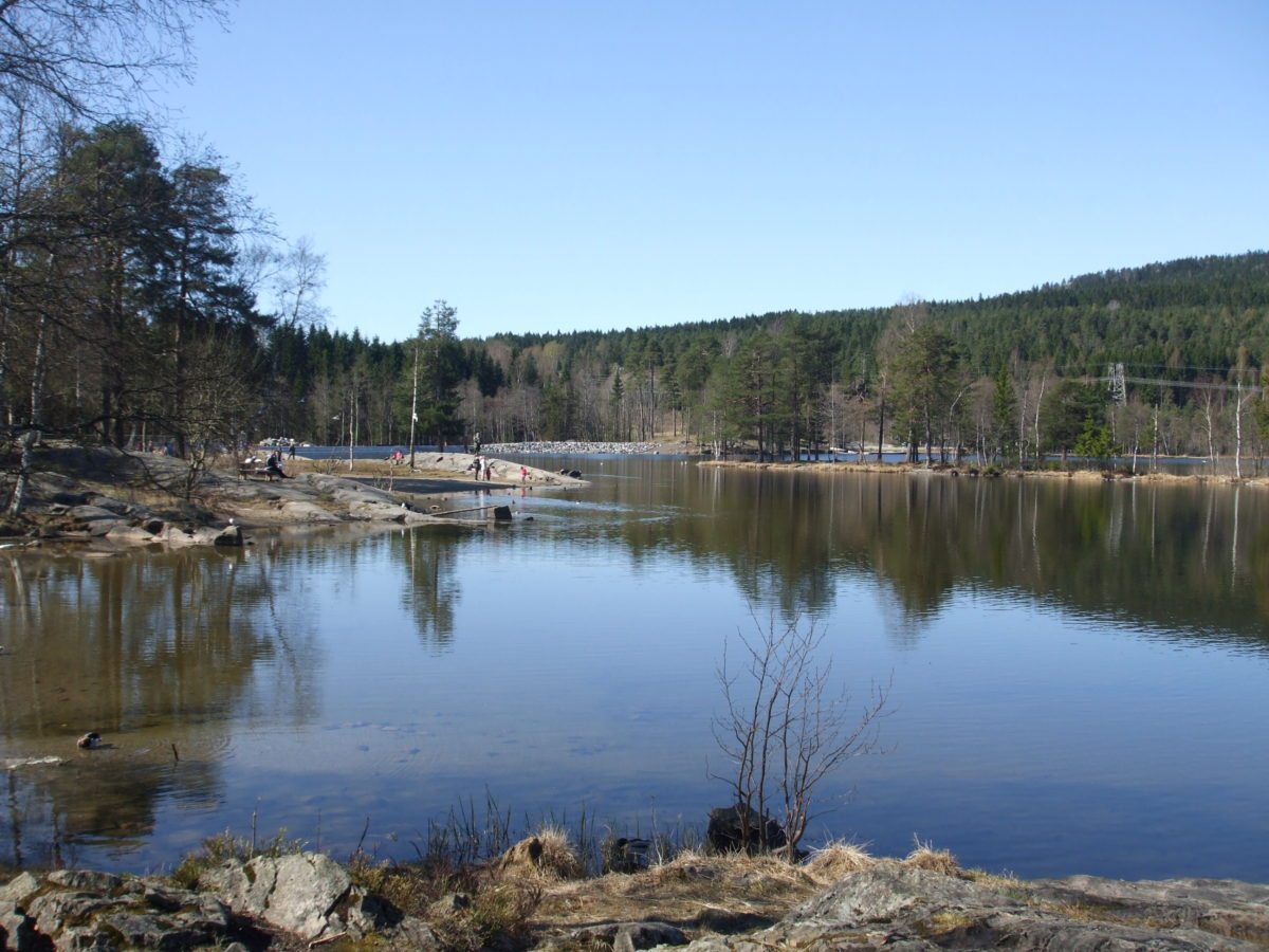Sognsvann this morning