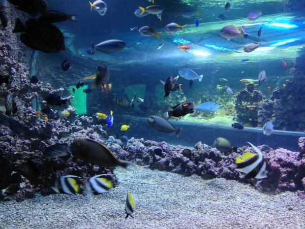 Fish at Bergen Aquarium