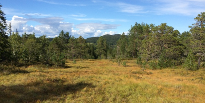 Getting lost in Bymarka