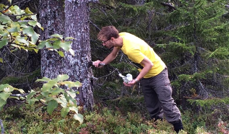 Picking blueberries in Trondheim