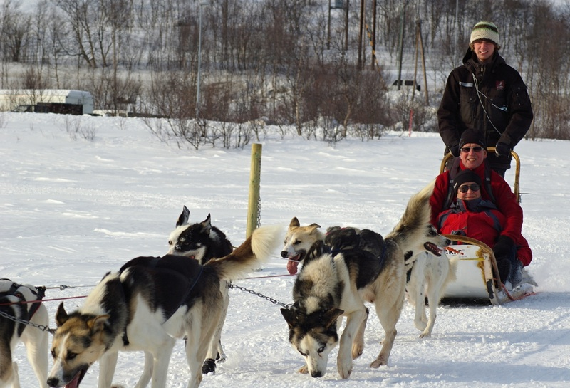 Husky sled