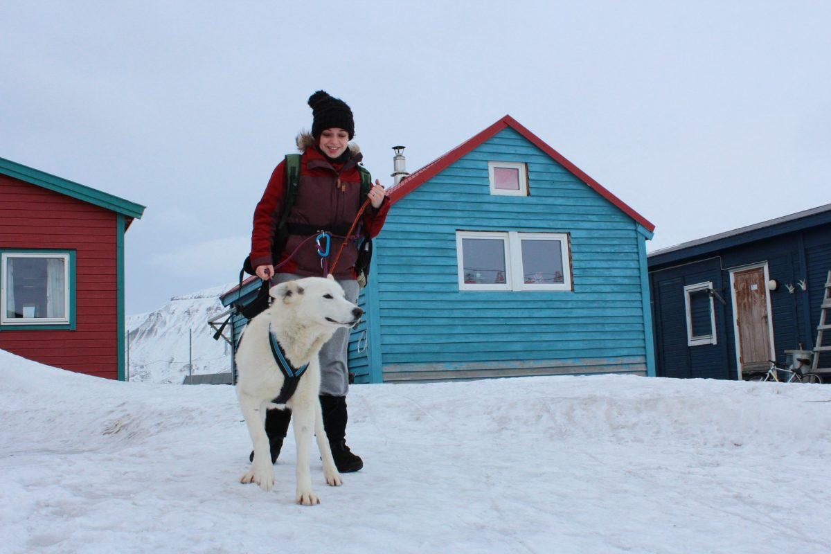 Dog in Longyearbyen