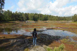 Hiking in Kristiansand: Jegersberg