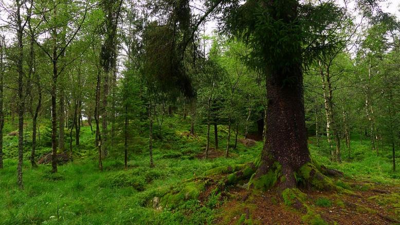 Forest in Bergen