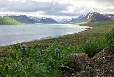 Exploring Iceland's Westfjords