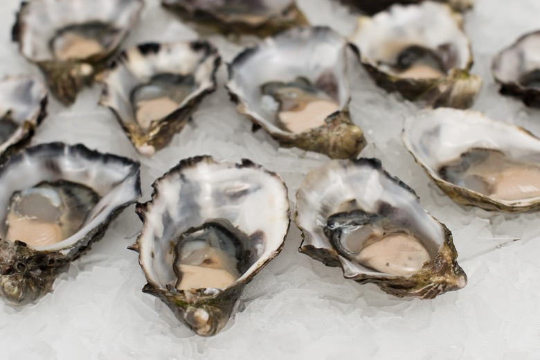 Oysters from the Oslofjord in Norway
