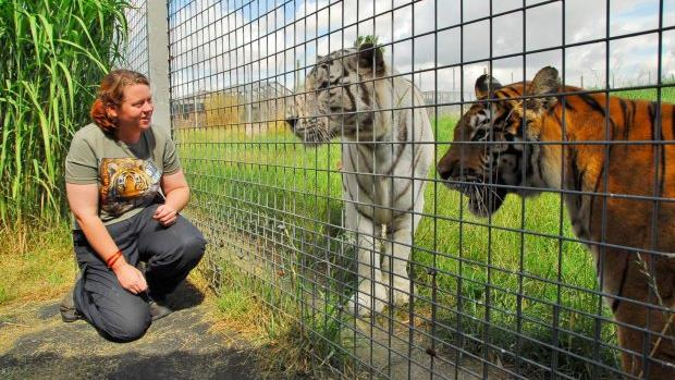 UK police: Tiger that killed zookeeper has not been killed