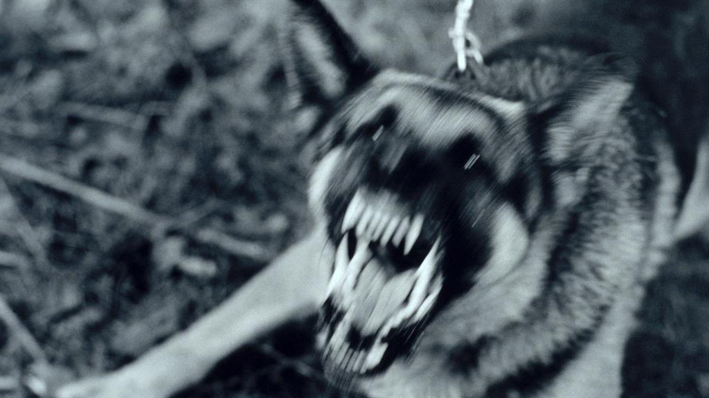 Warning after dog attacks on postmen