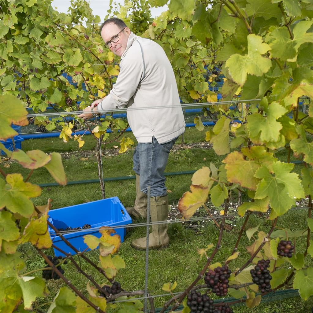 Harvest: Mark Driver at Rathfinny