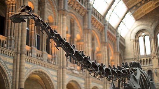 Saur loss Museum's diplodocus exhibit Dippy has gone