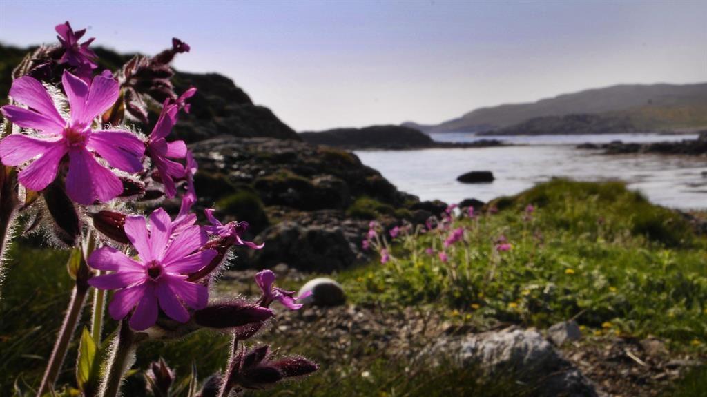 Weird weather: Shetland outshines Cornwall in July
