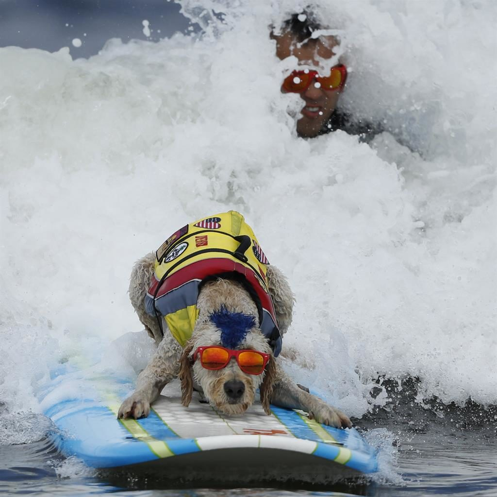 Good Dogs Hang Ten at World Dog Surfing Championship