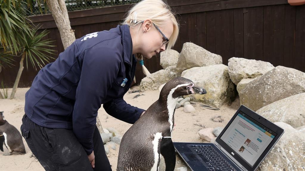 penguin dating