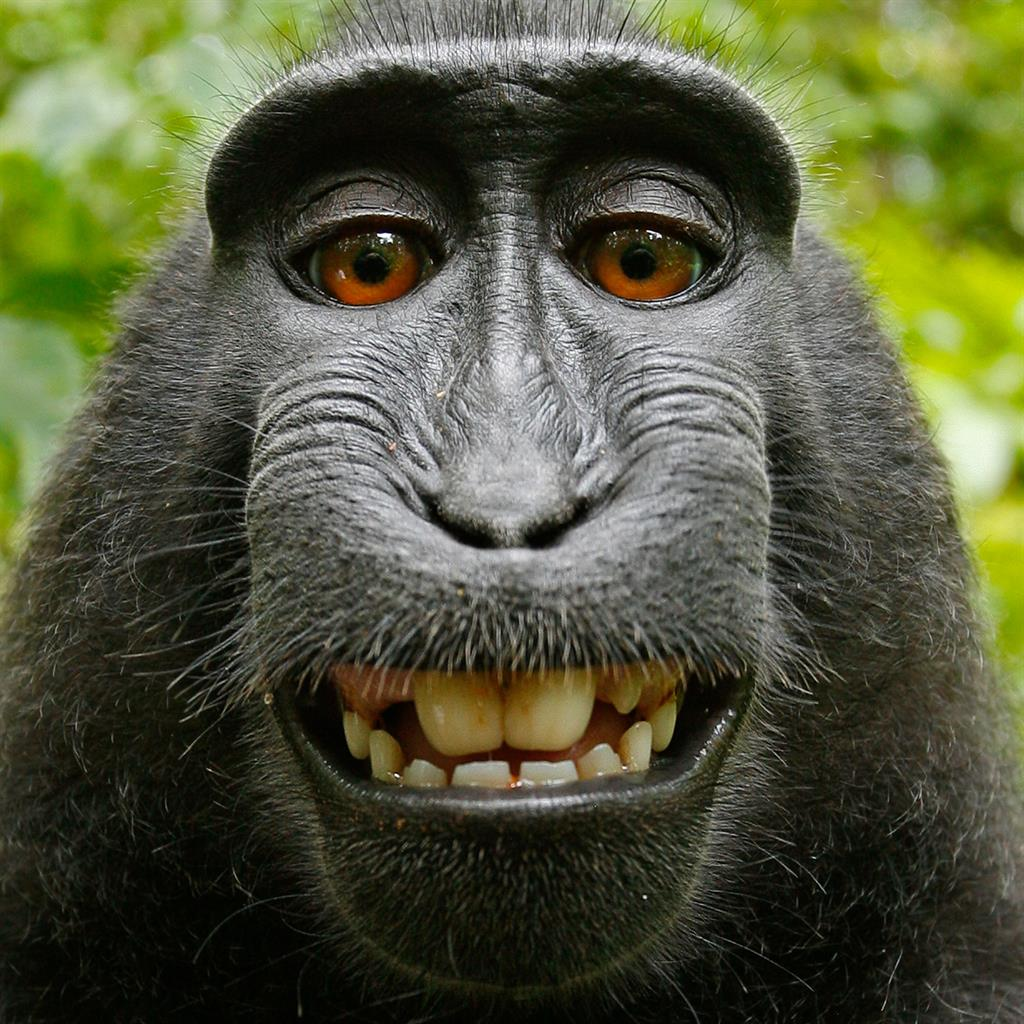 'Monkey selfie' case: Photographer wins two-year legal fight against Peta