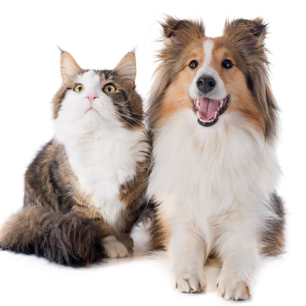Vanderbilt Study Finds Dogs Are Smarter Than Cats