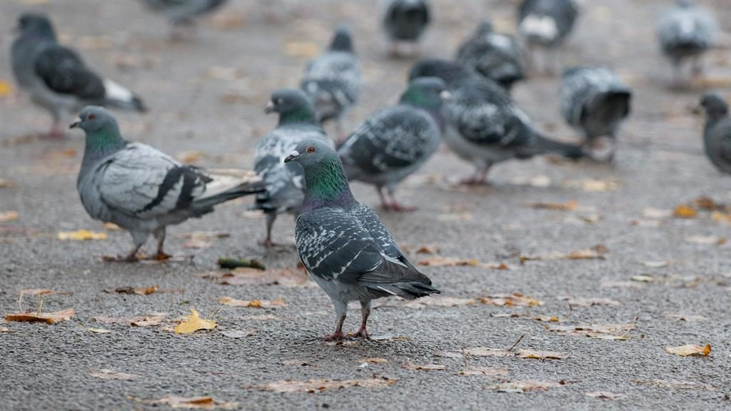 Pigeons Have Abstract Intelligence and Can Understand Concepts of Space and Time