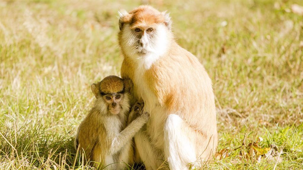 Thirteen monkeys die in fire at safari park in the UK