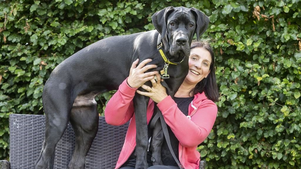 Growing boy: Puppy Arnie with new owner Julie PICTURES: SWNS