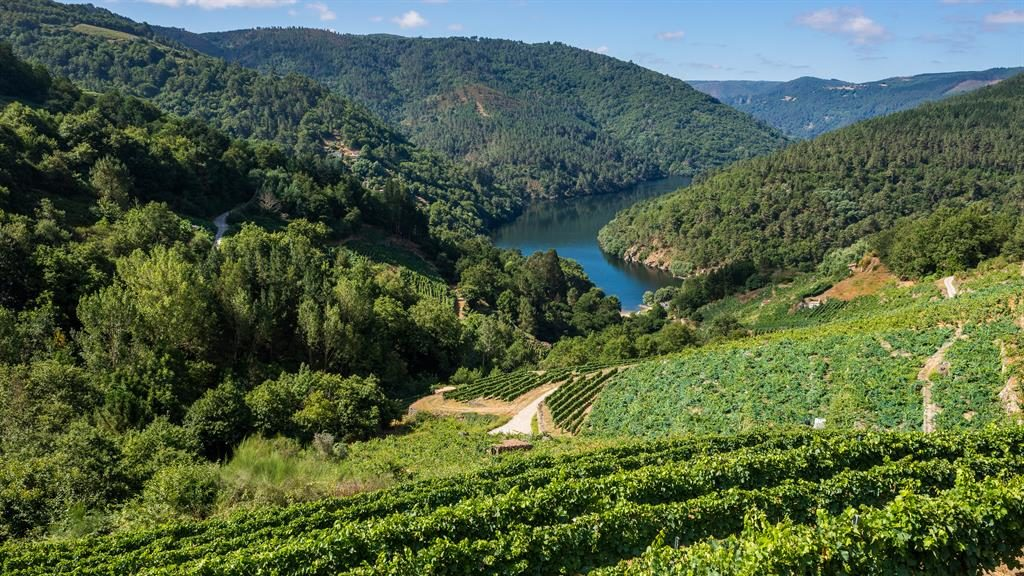 Planet of the grapes: Vineyards along the banks of the river Miño PICTURE: SHUTTERSTOCK