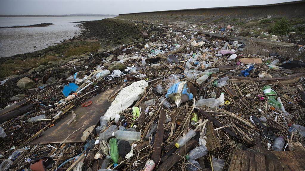 Plastic particles found in every human subject of global study