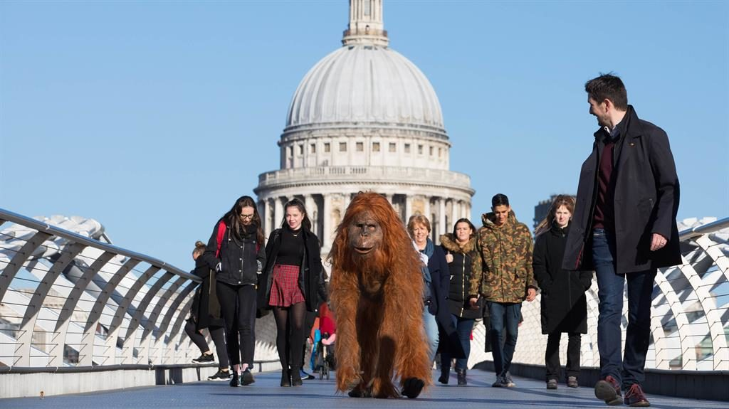 In the midst: Orangutan in London PICTURE: PA