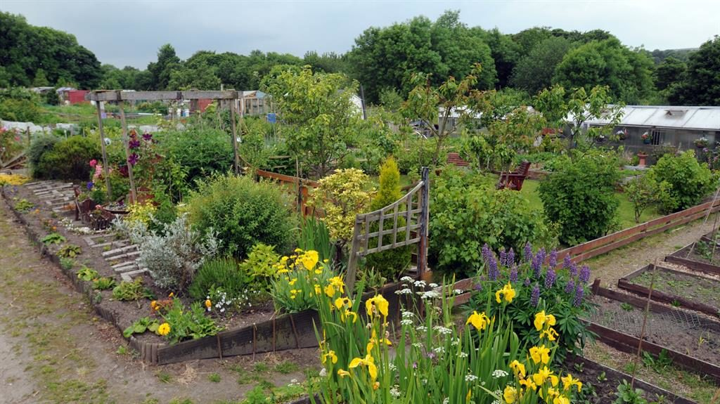 Targeted: The Harpers Lane allotments in Bolton, where vandals set hives alight PICTURE: JEFF MORRIS