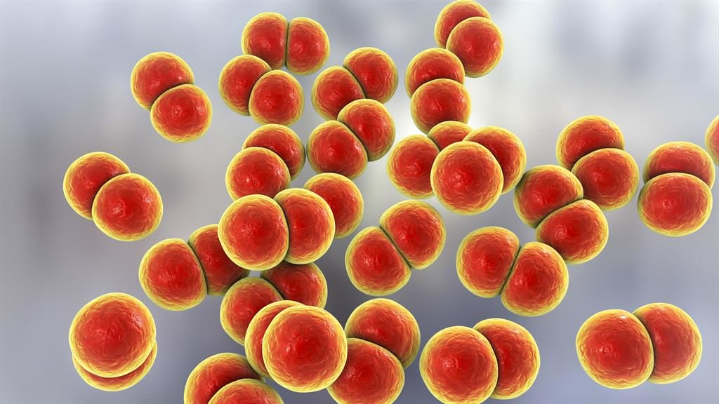 Super gonorrhoea 'has reached the UK', doctors warn