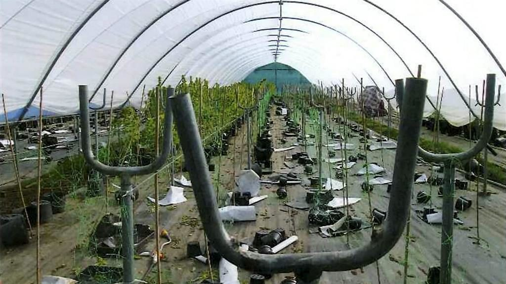 Busted: The cannabis farm near Bexhill PICTURES: SWNS