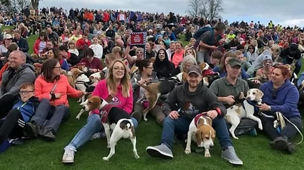 Beagles about: More than 1,000 of the breed were brought together for one giant dog walk