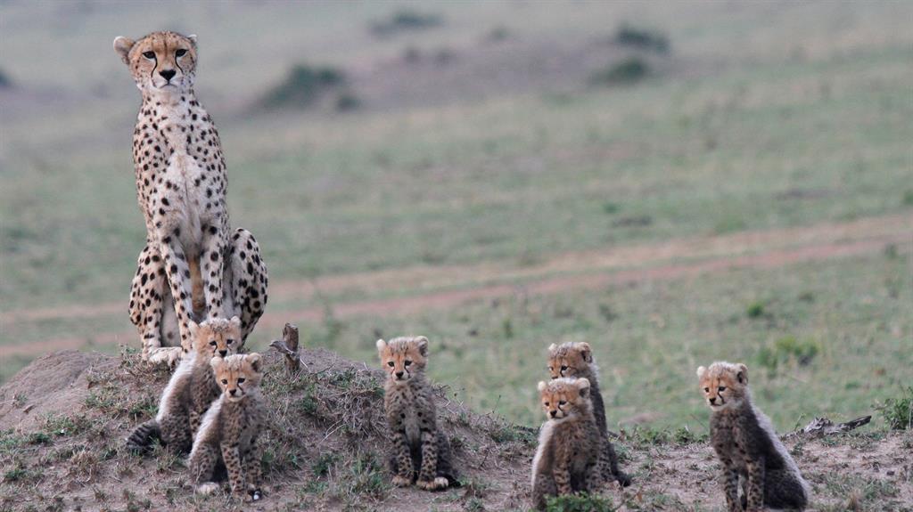 Caught on camera: Wildlife captured in photo exhibition