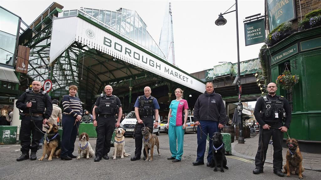 Front line: Winners include (left to right with handlers) Marci, Kai, Bruno, Delta, Dave and Jax. The PDSA's Rosamund Ford is third from right PICTURE: PA