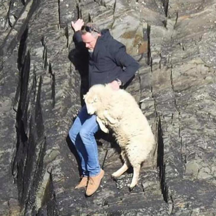 A close shave: This unknown man pulled the trapped sheep back up the rocks to safety PICTURE: ANDREA WILLIAMS